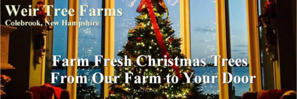 weir tree farms cut your own christmas tree - Cut Your Own Christmas Tree Farm